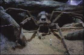 Comment s'appelle l'araignée que Hagrid garde dans la Forêt Interdite ?