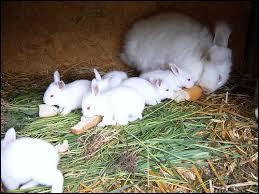 Les lapinous sont les bébés lapins.