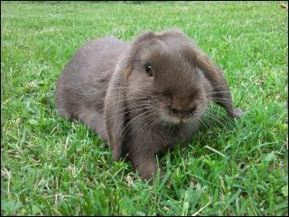 Cet animal aux longues oreilles est un lièvre.