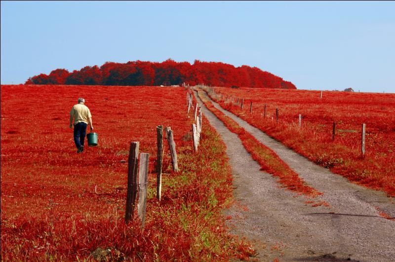 """Né un 10 mars, il a écrit """"L'herbe rouge"""" :"""