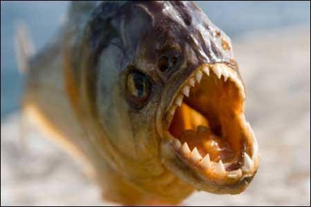 Quel est ce poisson qui a l'air bien sympathique ?