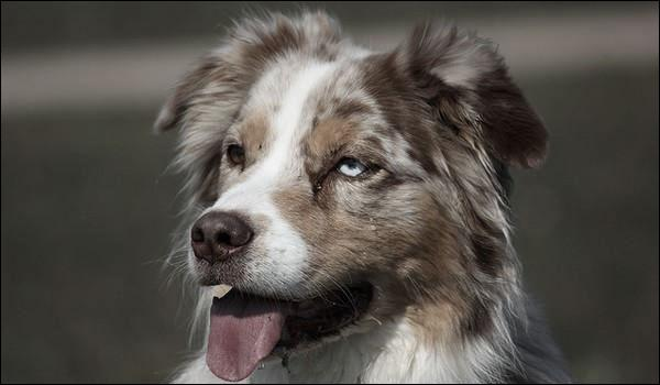"""Qui chantait """"Pauvre chien perdu dans la ville, y a des abris pour toi mon vieux, on a la conscience tranquille, mais quand on regarde tes yeux on a le coeur gros"""" ?"""