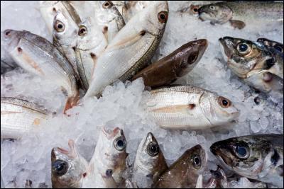 Quizz 10 mets typiquement canadiens ou qu b cois 2 for Nourriture du poisson