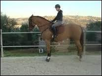 Lorsque le cheval n'avance pas au bout de plusieurs pressions de mollets, que faut-il faire ?