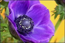 Pour trouvez le nom de cette personnalité, il vous suffit de trouver le nom de la fleur !