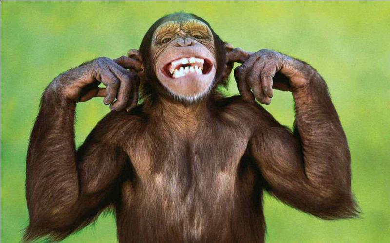 Le rire est le propre de l'homme, il n'existe pas chez les autres animaux.