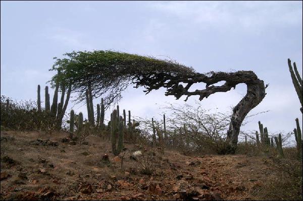 Nous ne trouvons pas cet arbre partout.Son tronc, de forme courbée, et les alentours vous font-ils penser à une action ?