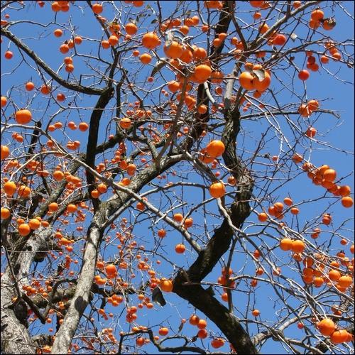 La forme de cet arbre me fait penser à quelque chose..., mais à quoi ?(question piège)
