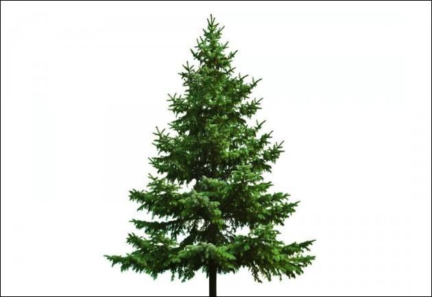 Ah, le sapin ! Super pour Noël ! Mais celui-ci a une forme qui fait penser à un triangle, lequel ?