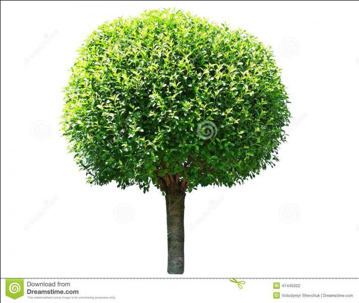 Ces feuilles qui forment figure une géométrique, plus le tronc d'arbre, à quoi cela vous fait-il penser ?