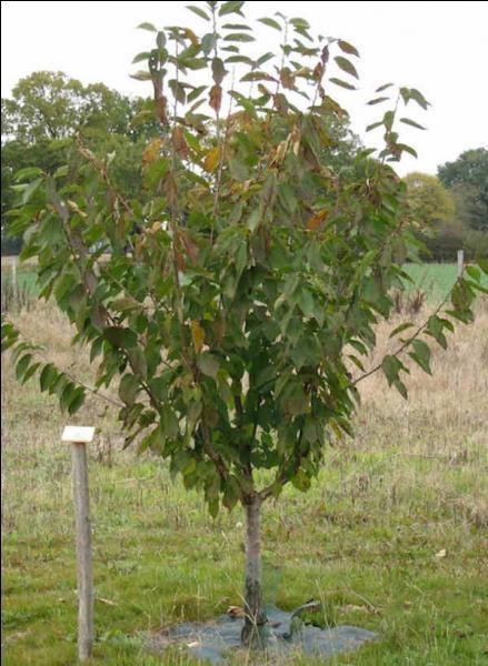 Regardez bien l'intérieur de cet arbre.A-t-il une forme particulière ?