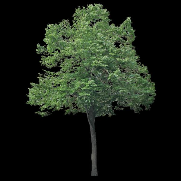 Cet arbre aussi me fait penser à quelque chose, mais à quoi ?Je dis :