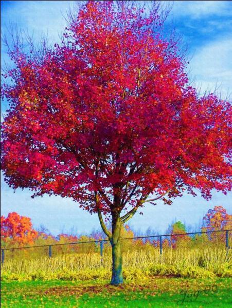 Pour cette question, nous allons nous intéresser aux couleurs de cet arbre. Vous font-elles penser à quelque chose ?