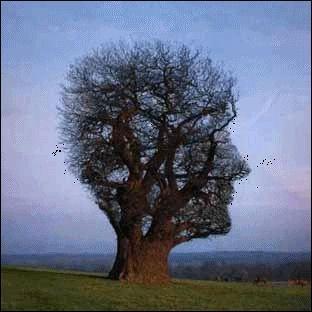 À quoi ressemble cet arbre ?