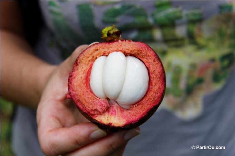 Quizz les fruits exotiques quiz decouvertes plantes - Comment s appelle l arbre du kaki ...
