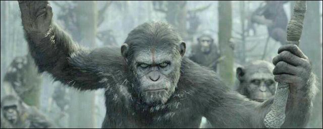 """Une expression """"spéciale primates"""" !"""