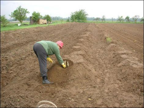 Quizz saveurs de nos r gions quiz specialites regions - Comptoir agricole bas rhin ...