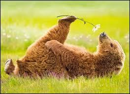 Cet ourson a plein d'amis ! Retrouvez l'animal qui ne fait pas partie de sa bande :