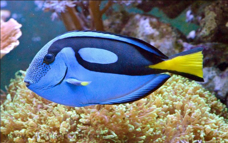 Quel est, à votre avis, le nom de ce poisson ?