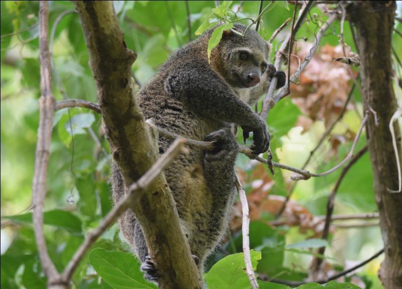 Connaissez-vous ce mammifère ?