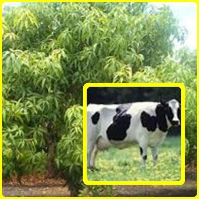 L'amélioration de la production d'aliments par les animaux et les végétaux