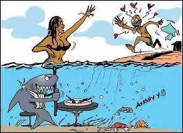 Vous partez à la pêche en mer ? De ces trois requins, lequel ne pouvez-vous pas attraper ?