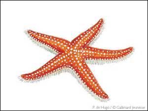 Comment appelle-ton autrement l'étoile de mer ?