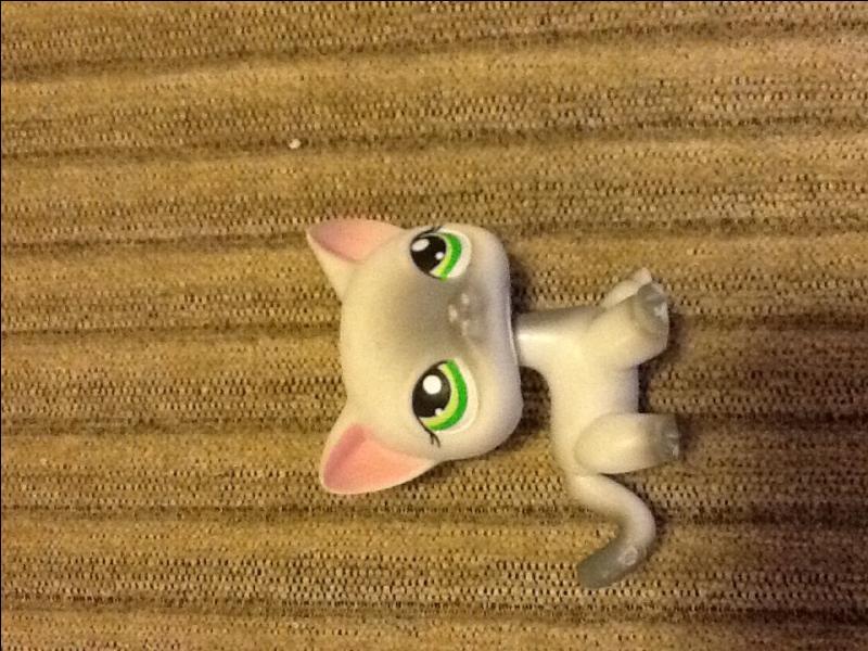 Comment s'appelle ce type de jouet ?