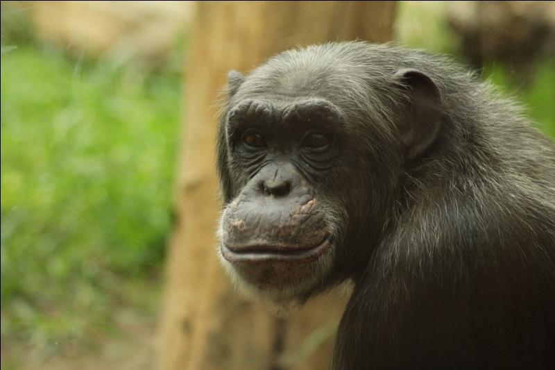 Les plus grands hominidés mesuraient 3 mètres de haut.