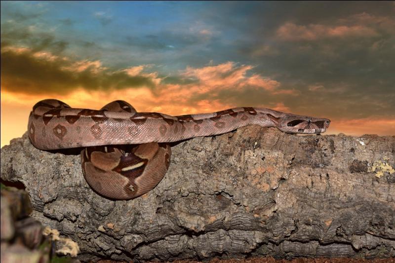 Le plus gros serpent de tous les temps se nourrissait probablement de...