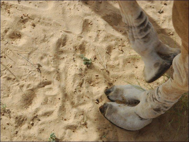 Partez dans le désert !