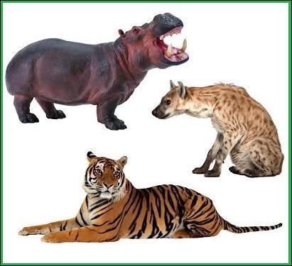 Animaux - Qui possède la mâchoire la plus puissante du règne animal ?