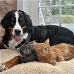 Deux chats sont couchés près du chien.