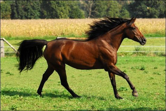 Le cheval fait partie de la famille des Équidés.