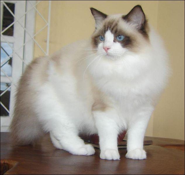 Le chat fait partie de la famille des Canidés.