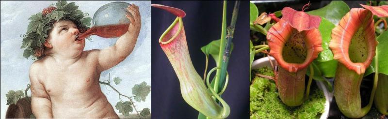 Il est sur, d'après Homère, que le « népenthès » a des propriétés médicinales. Mais, une autre forme de « népenthes » fait des dégâts dans le monde des insectes.Que signifie le mot « népenthès » et « népenthe » ?