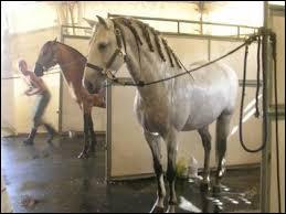 Que faut-il faire après avoir douché son cheval ?