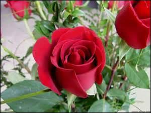 """Lequel de ces poèmes de Ronsard, tiré du recueil """"Sonnets pour Hélène"""" se termine par ces mots : """"Cueillez dès aujourd'hui les roses de la vie"""" ?"""