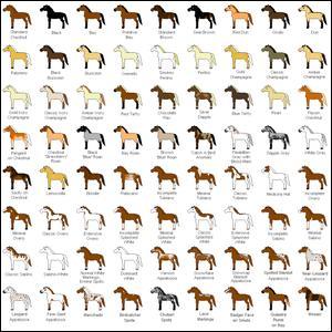 Quizz tout sur les chevaux quiz chevaux apprendre - Comment raviver les couleurs d un tapis ...