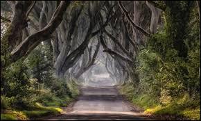 Comment s'appelle le chemin qui mène au Mur du nord ?