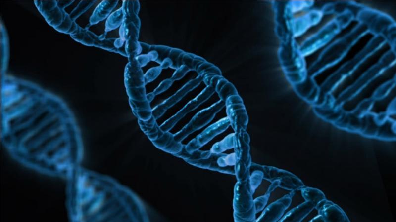 Quelle machine permet d'automatiser la réaction en chaîne par polymérase (PCR) ?