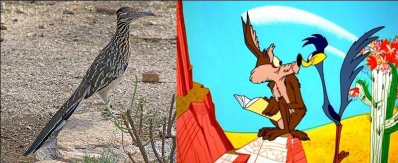 Ce héros est inspiré d'un animal du désert californien et d'un employé du studio connu pour son imitation d'un klaxon. Il a été créé en 1948 en même temps que son habituel stupide adversaire affamé.Qui est ce rapide héros ?