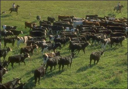Qui garde les troupeaux de la pampa argentine ?