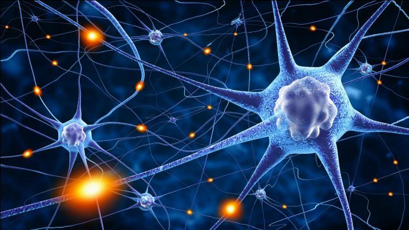 Le cerveau compte aux alentours de 100 millions de neurones. Est-ce vrai ou faux ?