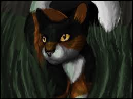 Cette chatte, souvent décrite comme rousse et blanche, est en fait écaille. Qui est-elle ?