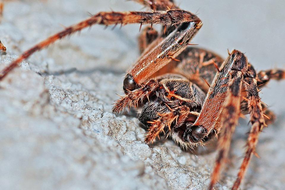 Insectes et arachnides dégoûtants