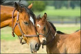 Quel est le nom du bébé du cheval ?