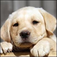 Quel est le nom du bébé du chien ?