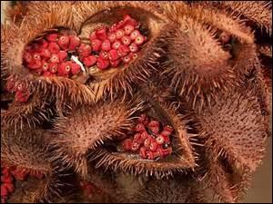 Quelles sont ces graines dont on fabrique un produit pour embellir et colorer les cheveux ?