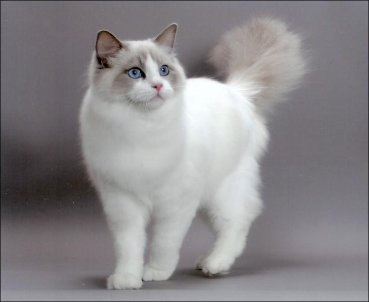Les chats peuvent-ils avoir un nom de famille ?